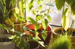 Вплив енергозберігаючих склопакетів на рослини